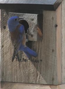 Custom Bird Feeders, Custom Built Bird Houses, Bat Houses For Sale