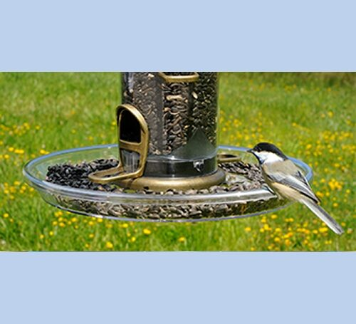 Bird Seed Tray
