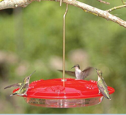 Ground Bird Feeder The Bird Man