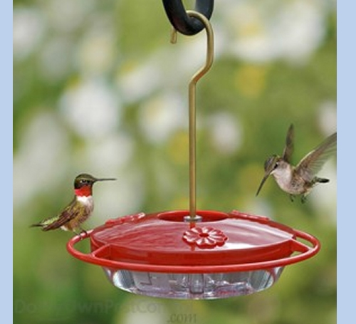 how small is a hummingbird