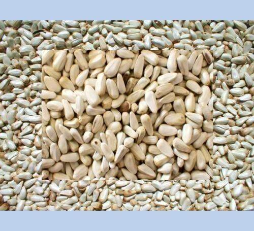 Safflower Bird Seed