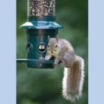 Squirrel Proof Feeder