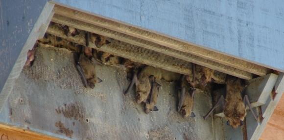 Building The Best Bat House