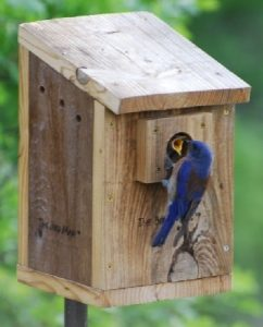 Birdhouse cleaning