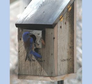 Cleaning Birdhouses